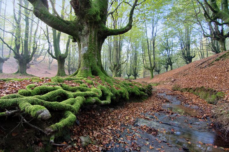 destinos otoño pais vasco