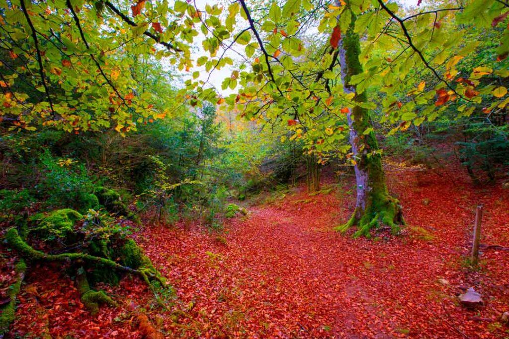 destinos otoño navarra